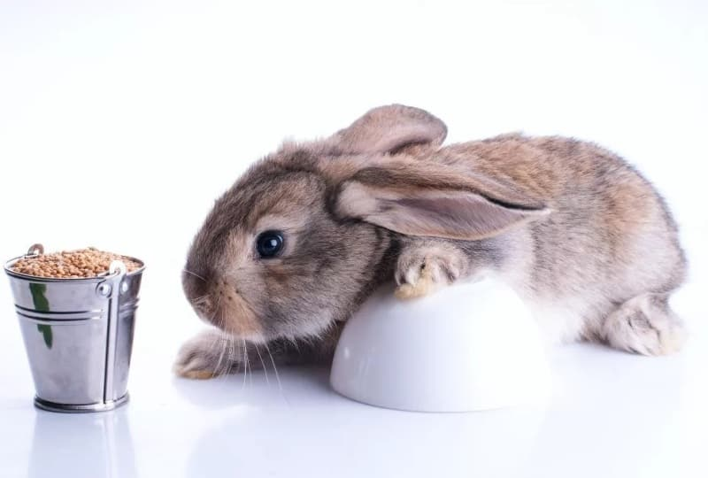 Каким зерном лучше кормить кроликов