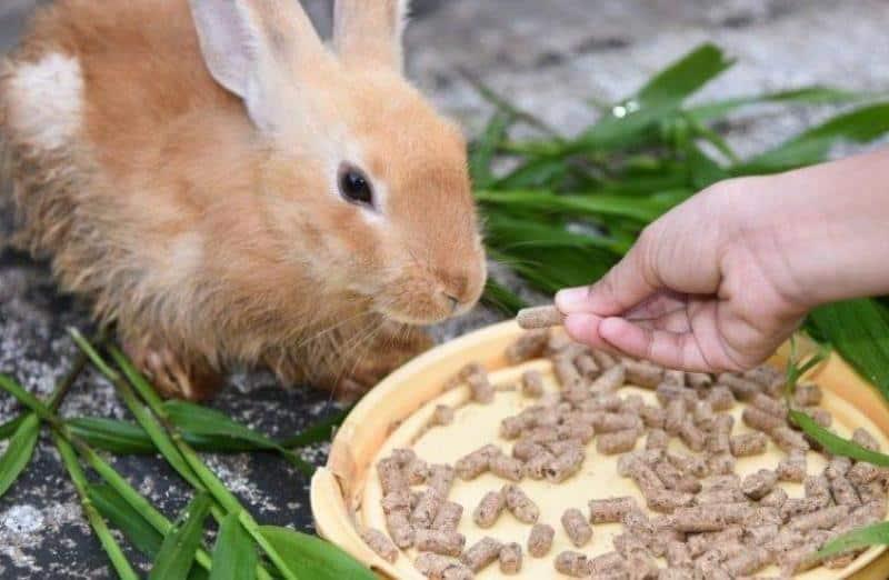Каким зерном кормить кроликов