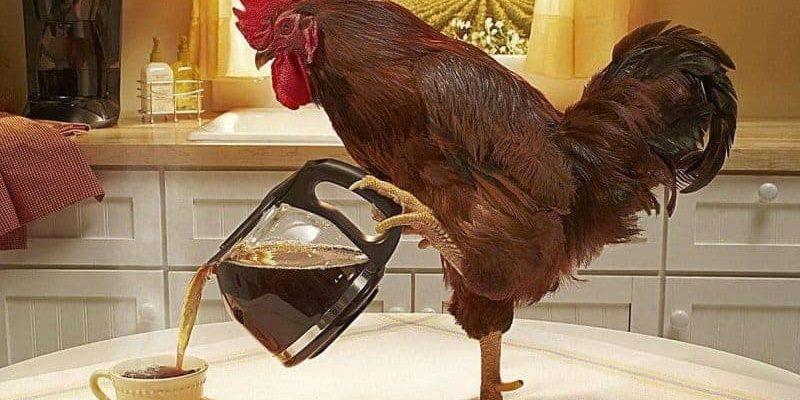 Как сделать поилку для кур